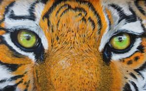 tiger-300x188